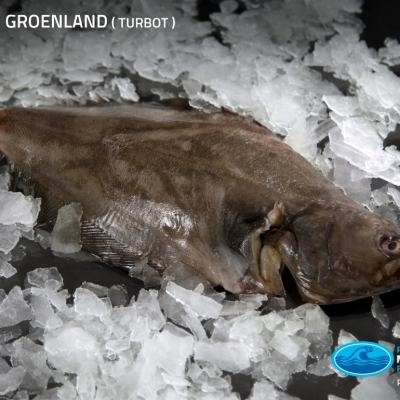 01_turbot_groenland